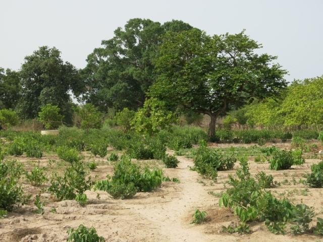 Iñaki Alegria. La Joie des Orphelins. Senegal
